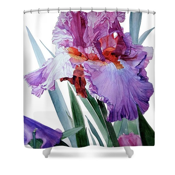 Watercolor Of A Tall Bearded Iris In Pink, Lilac And Red I Call Iris Pavarotti Shower Curtain