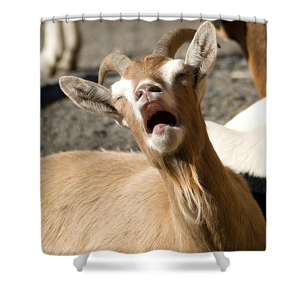 Is It Monday Already Shower Curtain