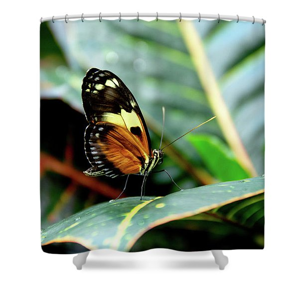 Ismenius Tiger Butterfly-2 Shower Curtain