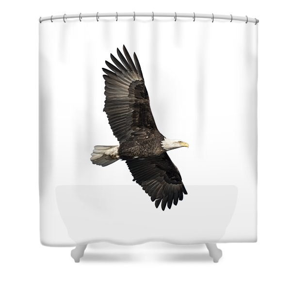 Isolated American Bald Eagle 2016-4 Shower Curtain