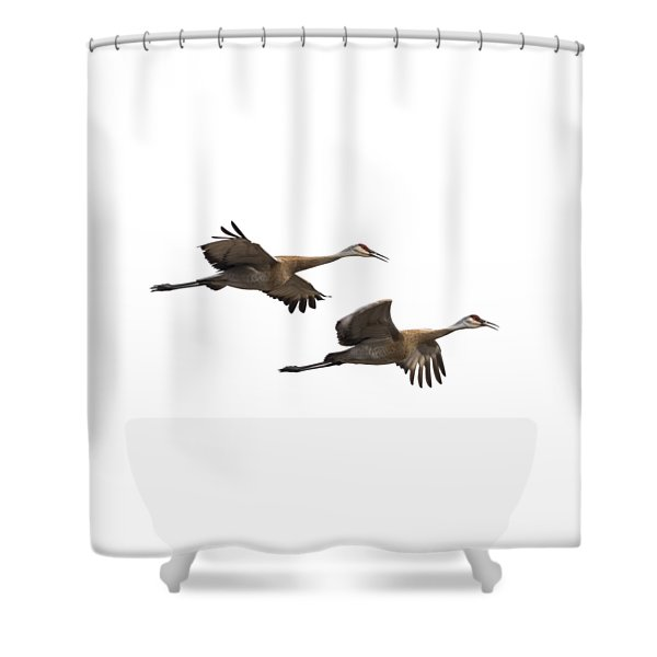 Isolated Sandhill Cranes 2016-1 Shower Curtain