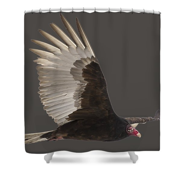 Isolated Turkey Vulture 2014-1 Shower Curtain