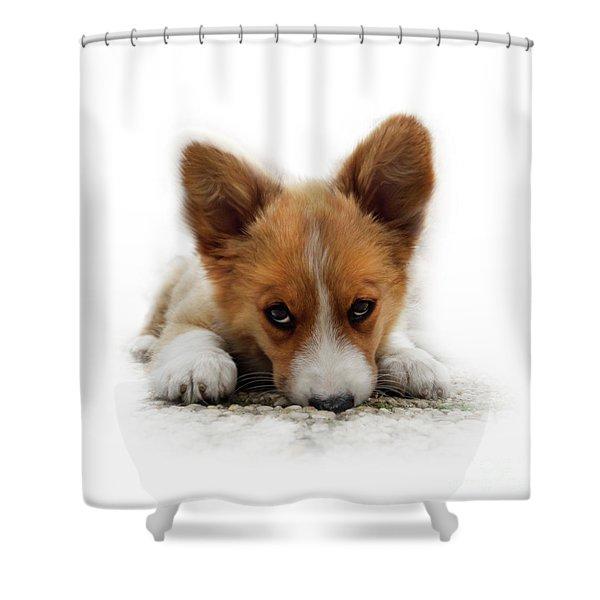 It Wasn't Me Corgi Shower Curtain