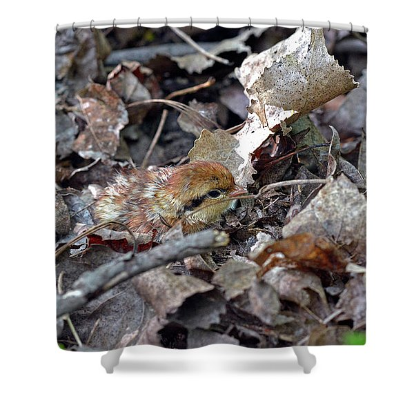 It's A Baby Grouse Shower Curtain