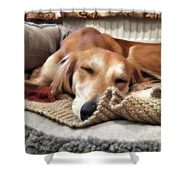 It's Been A Hard Day...  #saluki Shower Curtain