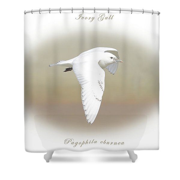 Ivory Gull Shower Curtain