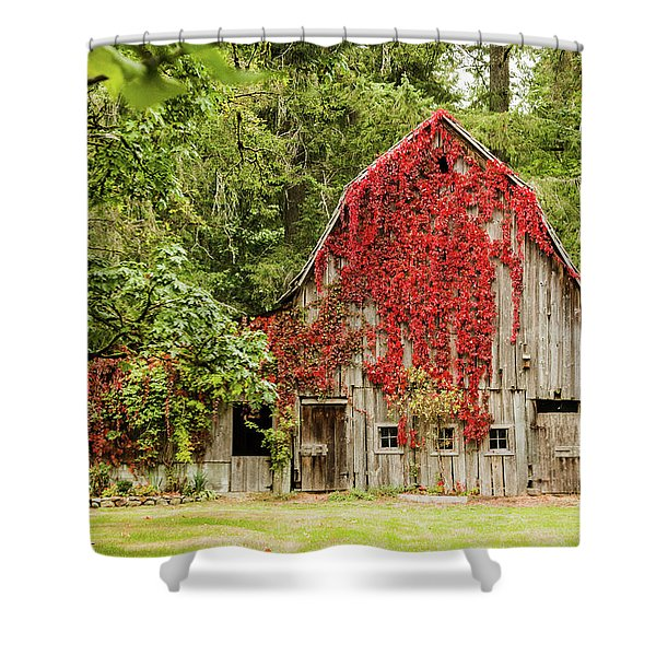 Vinginia Creeper Shower Curtain