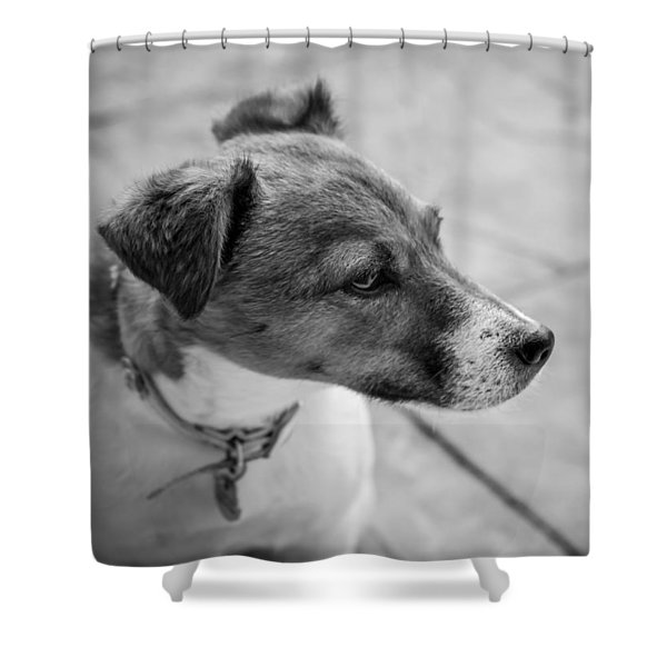 Shower Curtain featuring the photograph Jack Russell by Nick Bywater