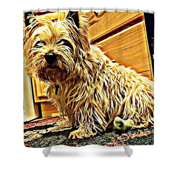 Jake The Dog Shower Curtain