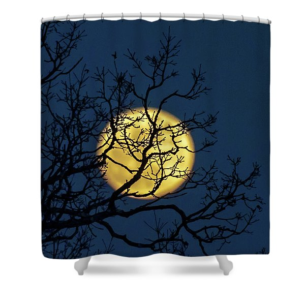 Janet's Moon Shower Curtain