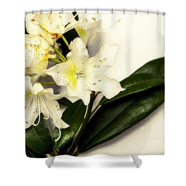 Japanese Flower Art Shower Curtain