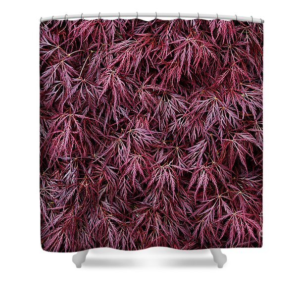 Japanese Maple Garnet Shower Curtain