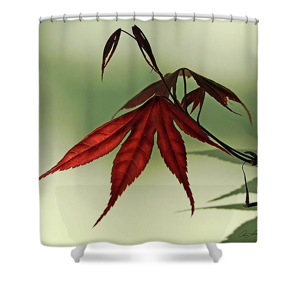 Japanese Maple Leaf Shower Curtain