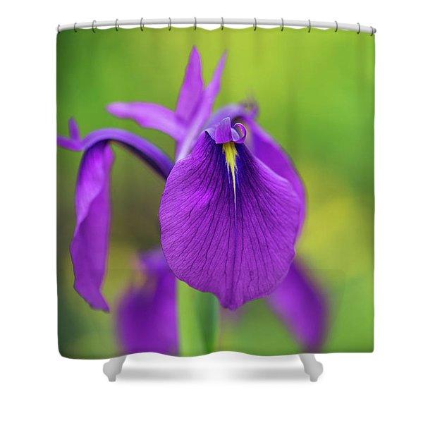 Japanese Water Iris Flower Shower Curtain