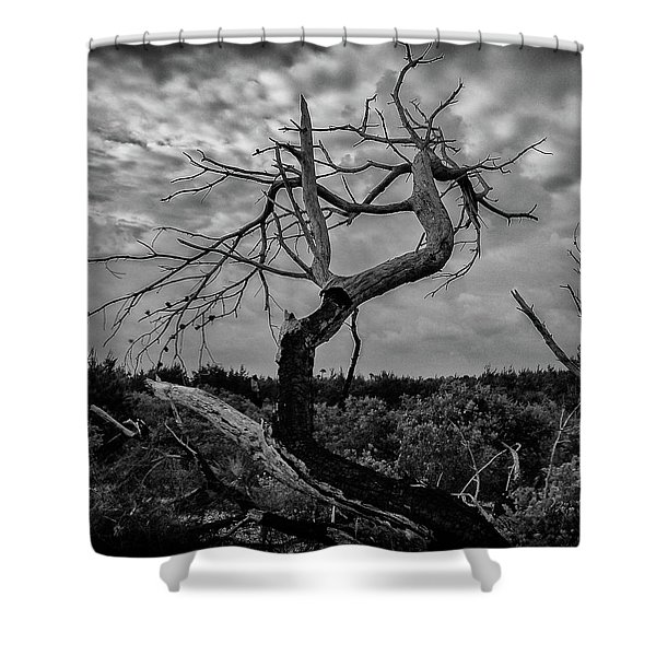 J.d. Tree 1 Shower Curtain
