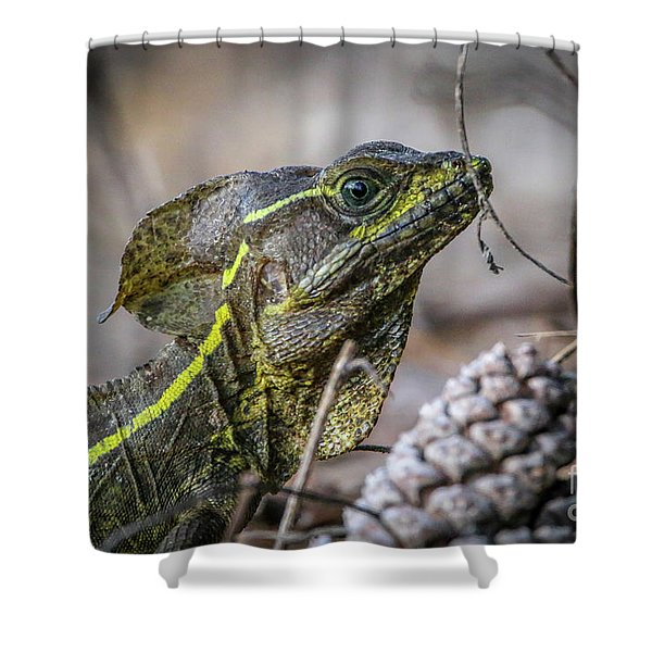 Shower Curtain featuring the photograph Jesus Lizard #2 by Tom Claud