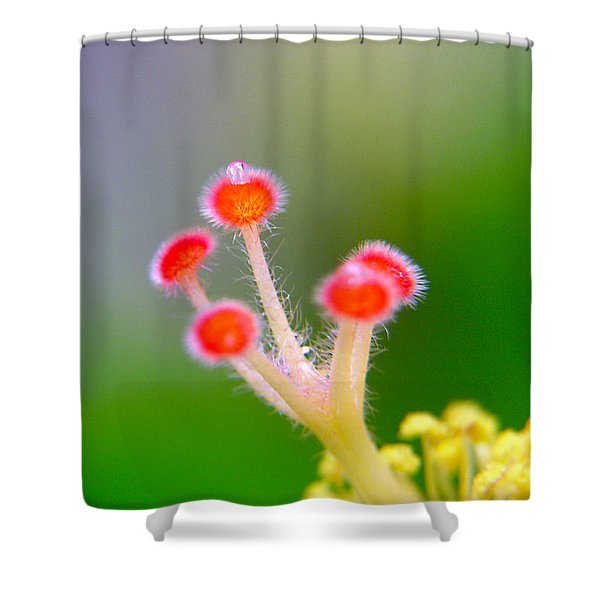 Jewel Of The Crown Shower Curtain