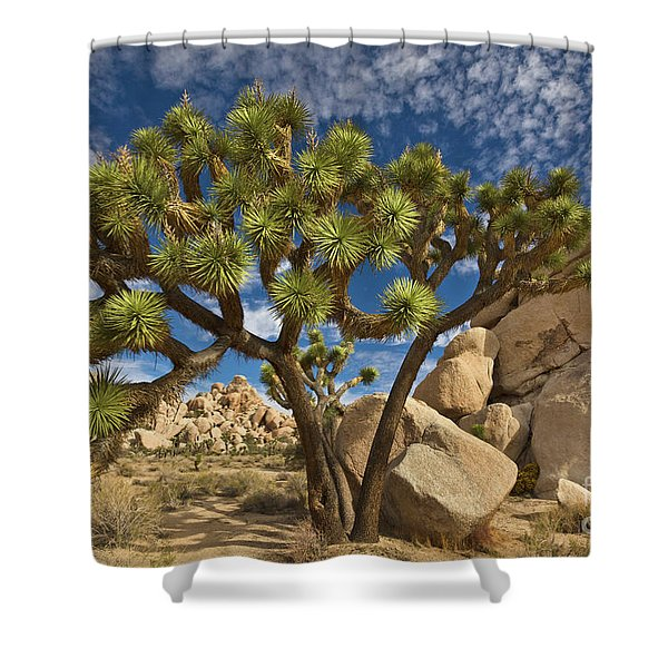 Joshua Tree And Blue Sky Shower Curtain