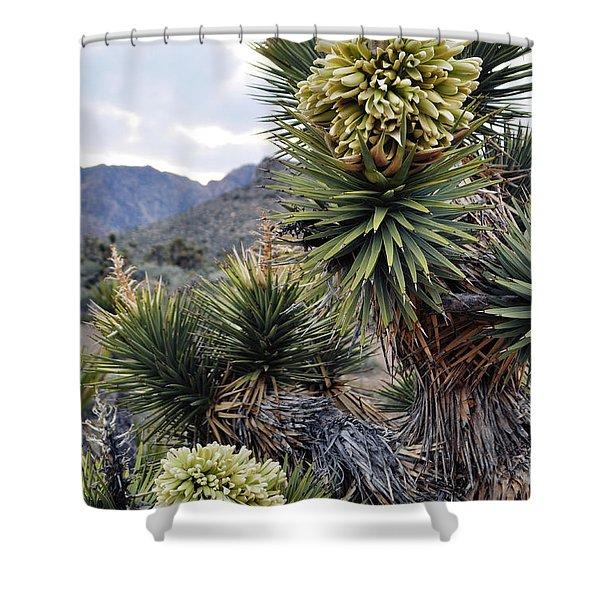 Joshua Tree Bloom Rainbow Mountain Shower Curtain