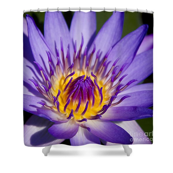 Journey Into The Heart Of Love Shower Curtain