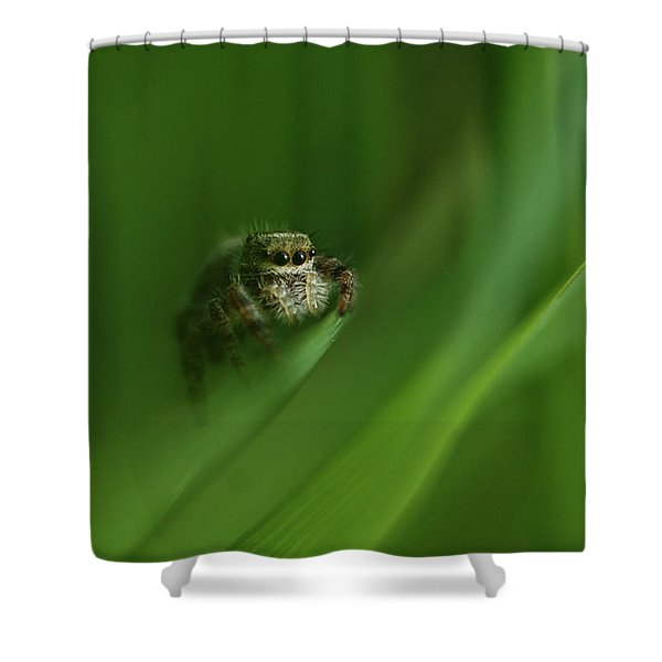 Jumping Spider Contemplating Life Shower Curtain