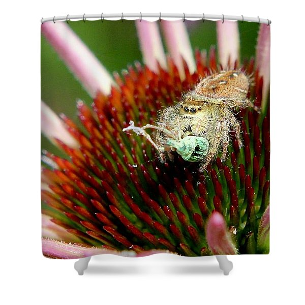 Jumping Spider With Green Weevil Snack Shower Curtain