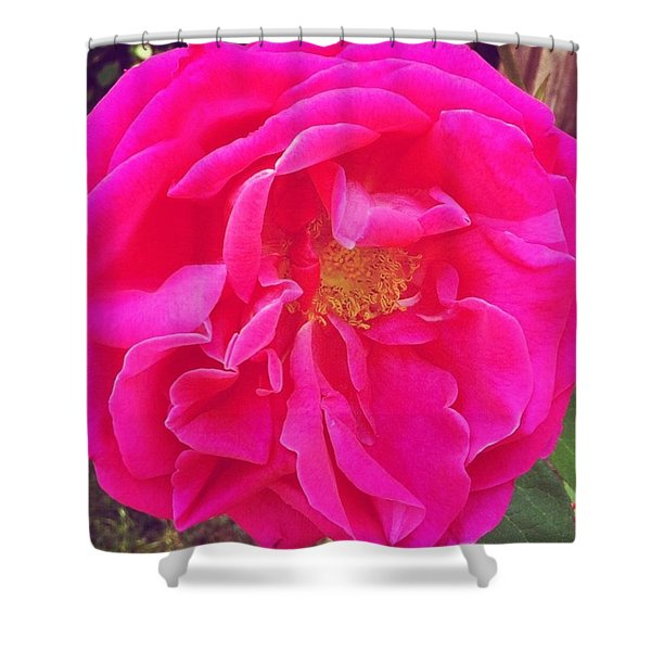 Just A Rose...#floral #flowers #pink Shower Curtain