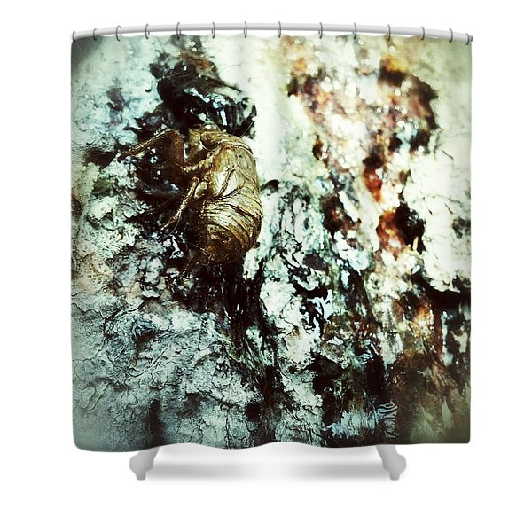 Just A Shell Shower Curtain