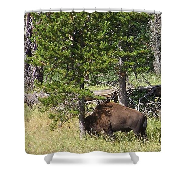 Just One More Shower Curtain
