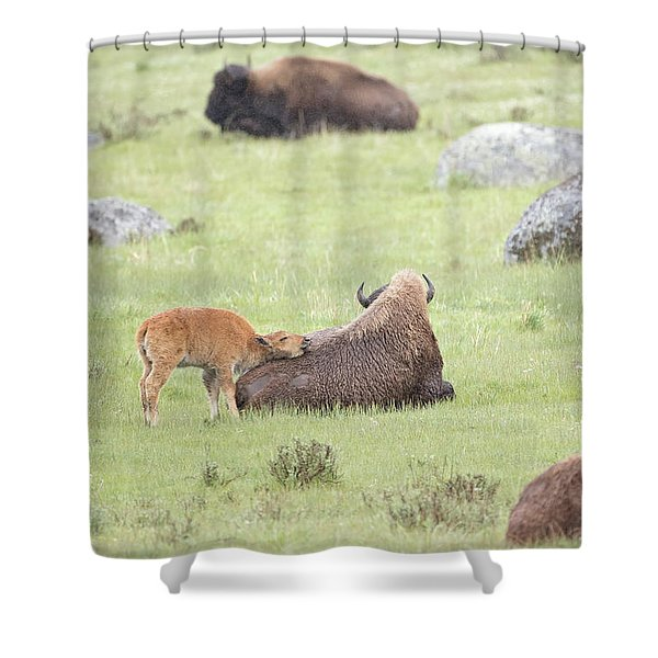Just Resting My Eyes Shower Curtain