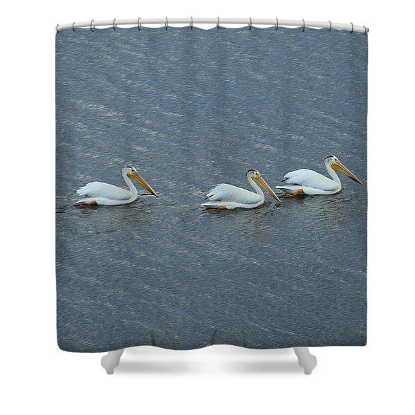 Triple Pelicans Lake John Swa Co Shower Curtain