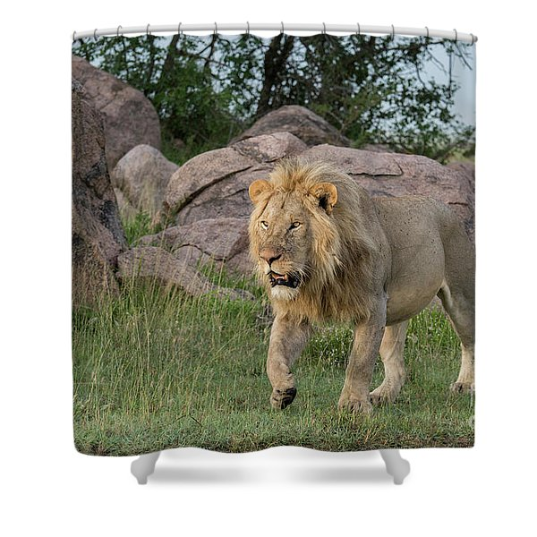 Just Too Full Shower Curtain