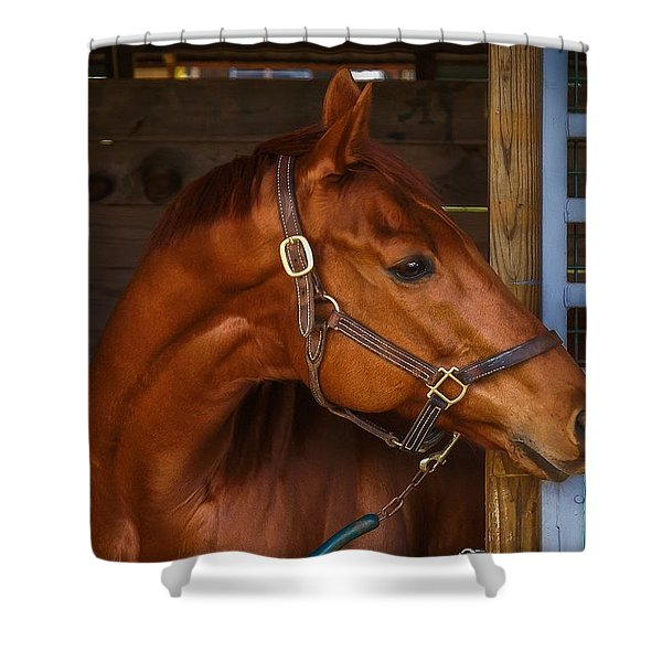 Shower Curtain featuring the photograph Just Waiting For My Turn To Race by Robert L Jackson