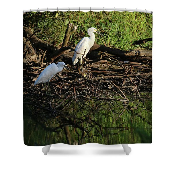Juv Little Blue Herons Two Shower Curtain