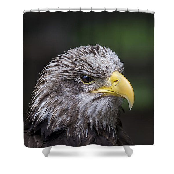 Shower Curtain featuring the photograph Juvenile Bald Eagle by Andrea Silies