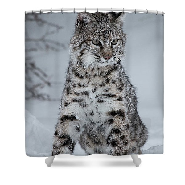 Juvenile Bobcat In The Snow Shower Curtain