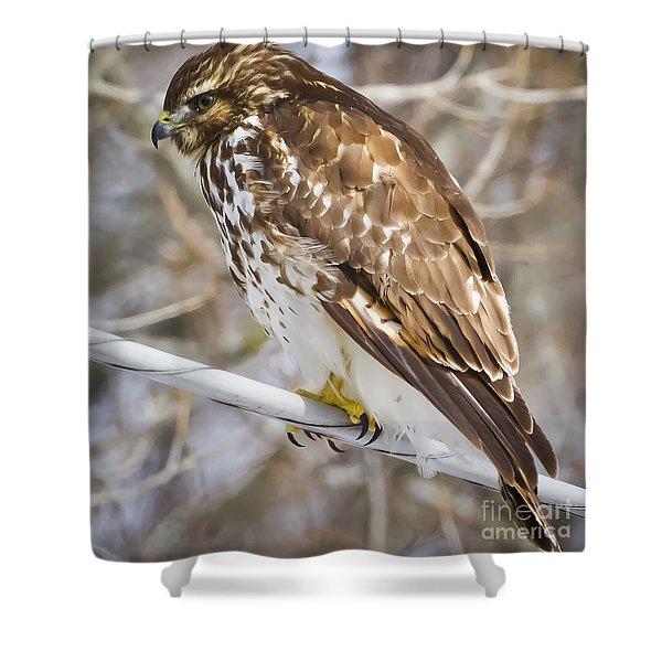 Juvenile Red-shouldered Hawk  Shower Curtain
