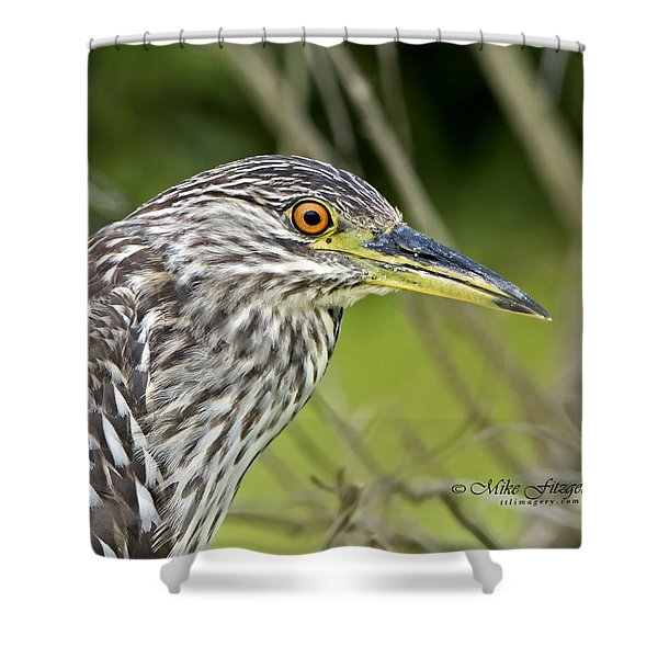 Juvi Black-crowned Night Heron Shower Curtain