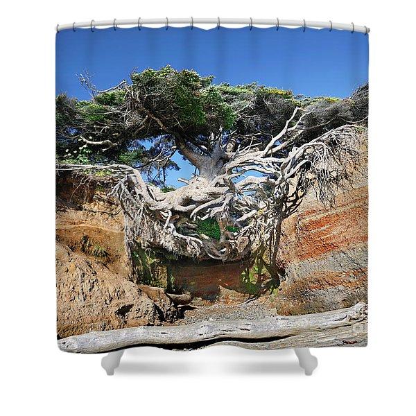 Kalaloch Tree Of Life Shower Curtain