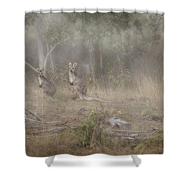 Kangaroos In The Mist Shower Curtain