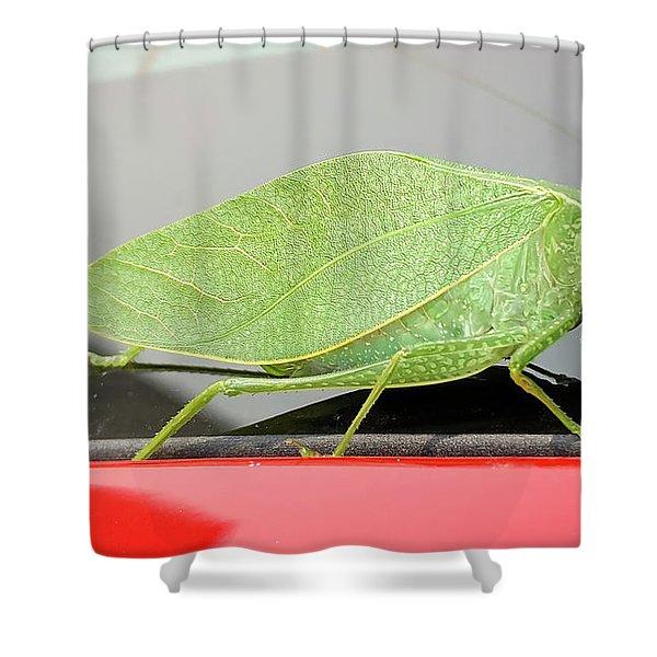 Katydids- Bush Crickets Shower Curtain