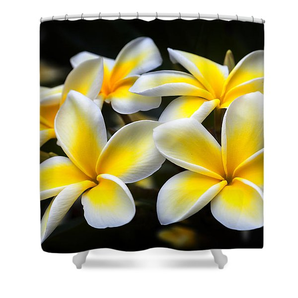 Shower Curtain featuring the photograph Plumerias Canvas Print,photographic Print,art Print,framed Print,iphone Case,samsung Galaxy Case, by David Millenheft