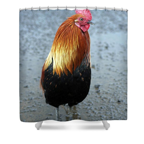 Kaui Rooster Shower Curtain