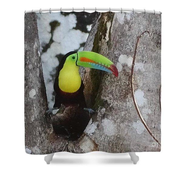 Keel-billed Toucan #2 Shower Curtain