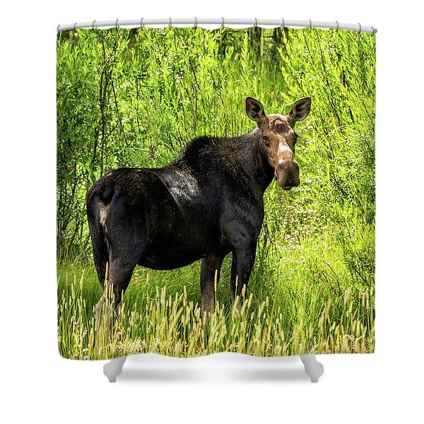 Keep Your Distance Wildlife Art By Kaylyn Franks Shower Curtain