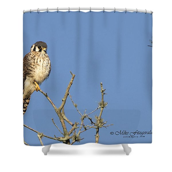 Kestrel And Lunch Shower Curtain