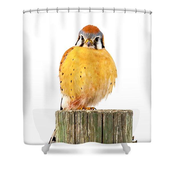 Kestrel Shower Curtain