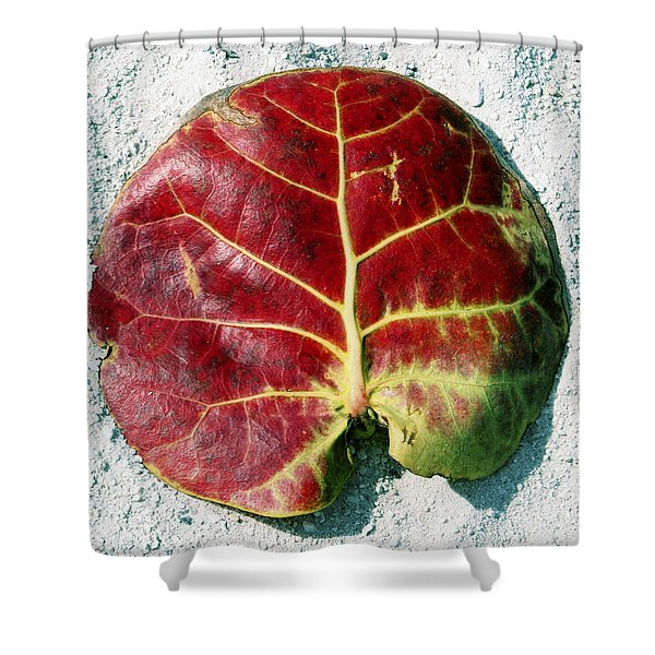 Key West Leaf In The Sand Shower Curtain