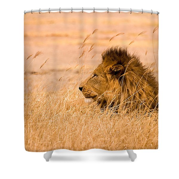 King Of The Pride Shower Curtain