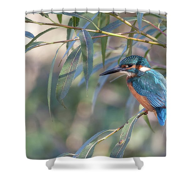Kingfisher In Willow Shower Curtain